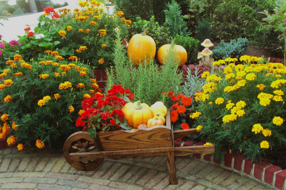Grădinăritul în Octombrie